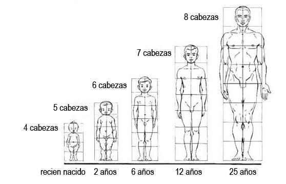 Proporciones del cuerpo humano Da Vinci y Vitruvio los cánones