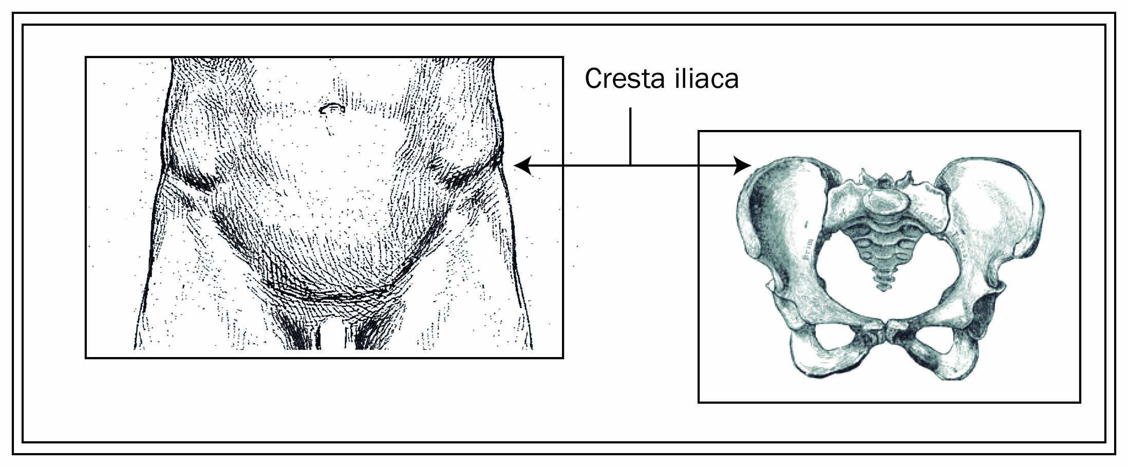 Increíble Anatomía Cresta Ilíaca Embellecimiento - Imágenes de ...